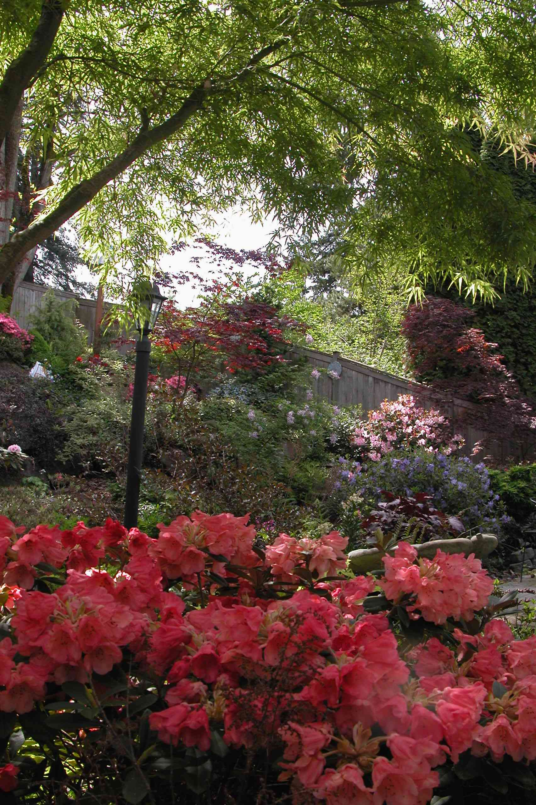 my garden. Black Bedroom Furniture Sets. Home Design Ideas